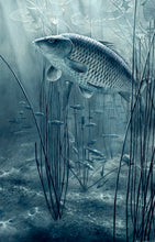 Load image into Gallery viewer, The Midnight Pool black and white fish art print of carp and roach by wildlife artist David Miller. Cyprinus carpio.