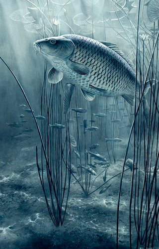 The Midnight Pool black and white fish art print of carp and roach by wildlife artist David Miller. Cyprinus carpio.