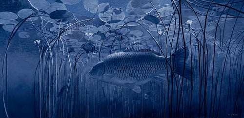 Moonlight Sonata carp underwater fish art print by wildlife artist David Miller. Cyprinus carpio.