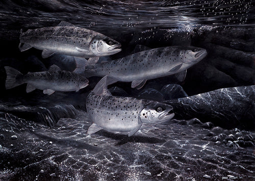 Night Fishing for Sea Trout fish art print by wildlife artist David Miller. Salmo trutta.