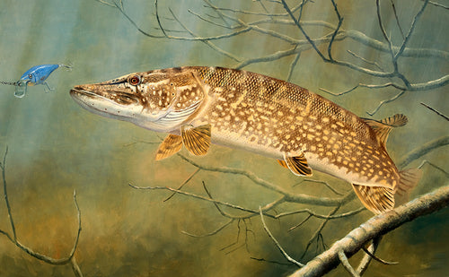 Rod Licence Pike 2013 to 2014 limited edition fish art print by wildlife artist David Miller. Esox lucius.