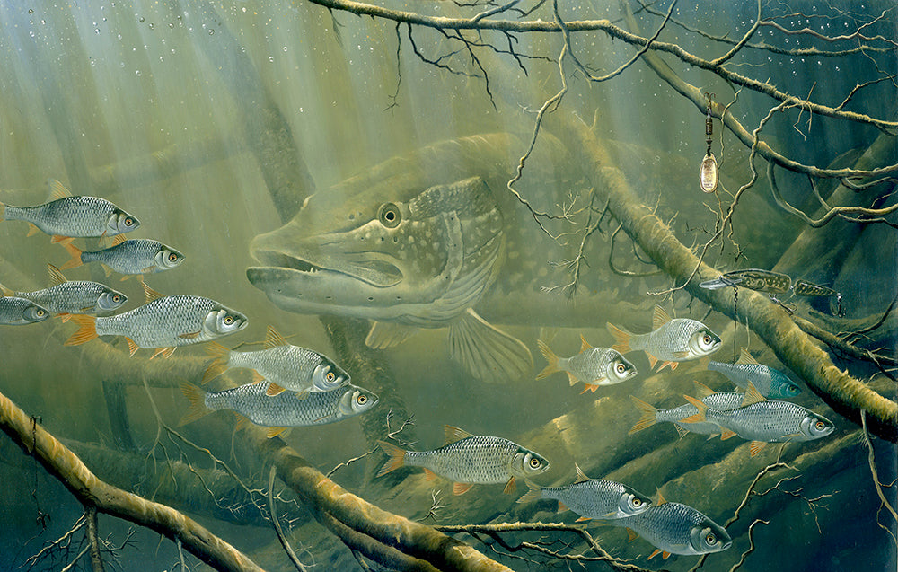 Pike and Roach fish art print by wildlife artist David Miller. Esox lucius.  Rutilus rutilus.