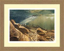 Load image into Gallery viewer, The Salmon & the Fly