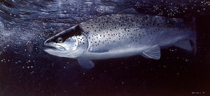 Towy Sewin fish art print of a sea trout underwater at night by wildlife artist David Miller. Salmo trutta.