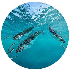 Blue Planet Series - Mackerel II