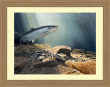 Load image into Gallery viewer, Salmon on the Fly