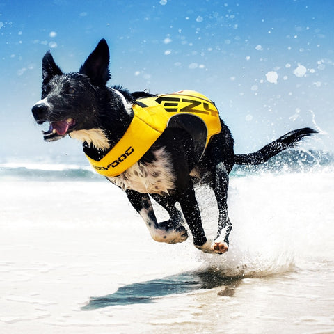 EzyDog DFD X2 Boost Lifejacket