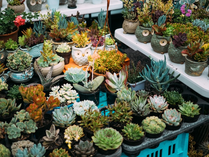Unusual Indoor Plants to Grow at Home