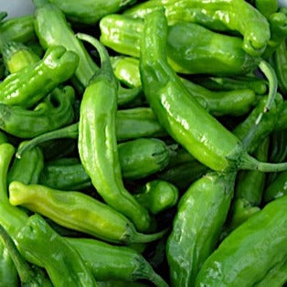 Friggitelli Peppers (500g)