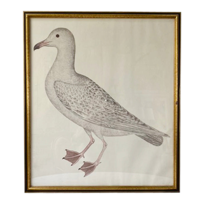 Vintage Swedish Olof Rudbeck Bird Print (White Gull)