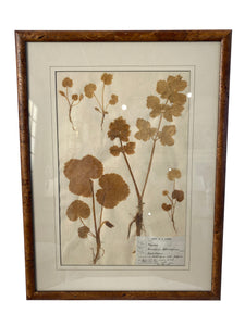 Signed Herbarium Artwork with Cork Frames Ca. 1836-1904 (Set of 4)