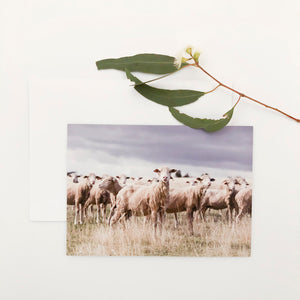 'The Ewes' Greeting Card