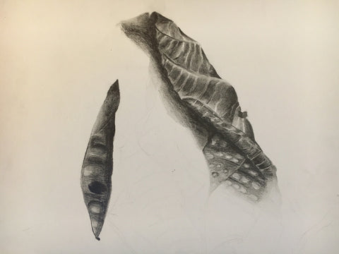 Nature study in pencil, The Visionary ART Workshop