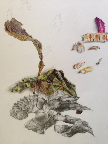 Pencil and colour pencil study by art student at The Visionary ART Workshop