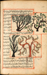 Zakarīyā ibn Muḥammad al-Qazwīnī ~ The Shiab tree and the Shahbalout tree