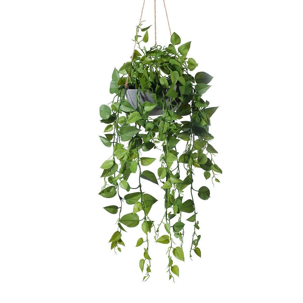 Philodendron Hanging Bowl REAL TOUCH