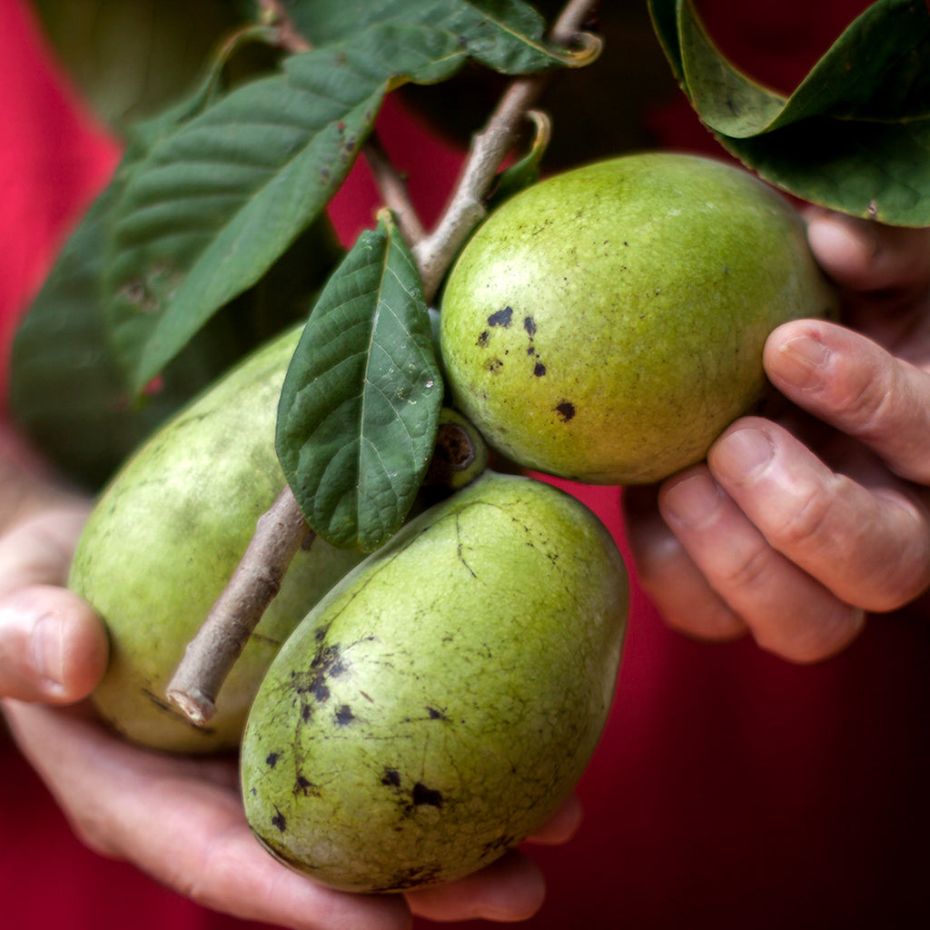 3 Easy Ways to Enjoy Pawpaws!