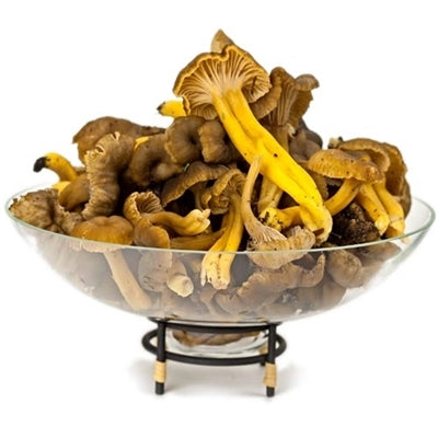 Fresh Yellowfoot Mushrooms - per lb