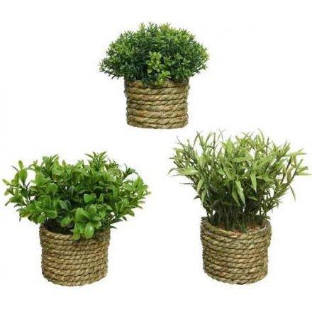 Set of Three Artificial Greenery in Dried Grass Pot