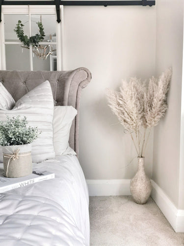 Extra Fluffy White/Natural Pampas Grass - Five Stems