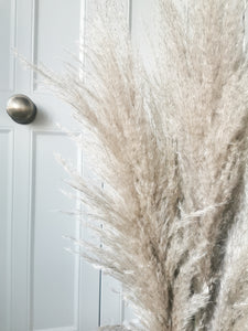 Extra Fluffy Natural Pale Brown Pampas Grass - Five Stems