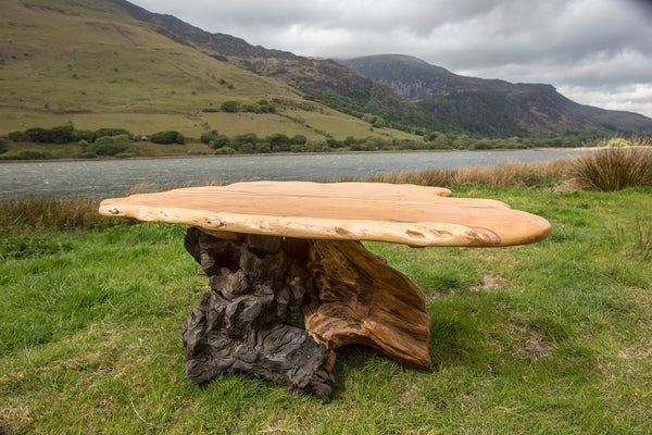Rustic Salvaged Yew, Oak and Bog Oak Stump Coffee Table. Handmade in Wales, UK. Full View