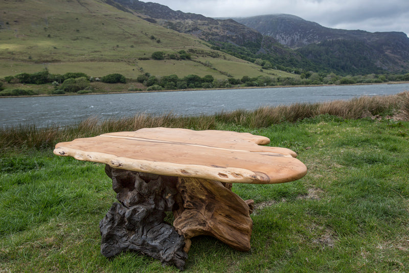 Rustic Salvaged Yew, Oak and Bog Oak Stump Coffee Table. Handmade in Wales, UK. View from Top.