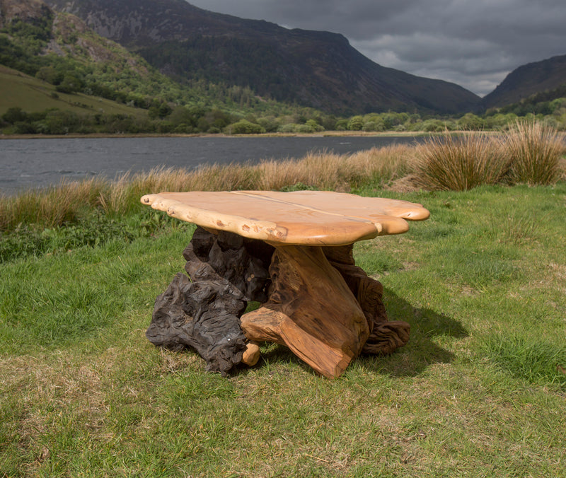 Rustic Salvaged Yew, Oak and Bog Oak Stump Coffee Table. Handmade in Wales, UK. 2 Contrasting Stumps.