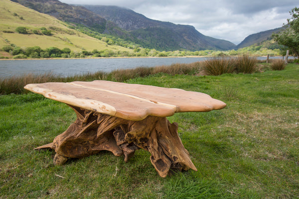 Yew Stump Table