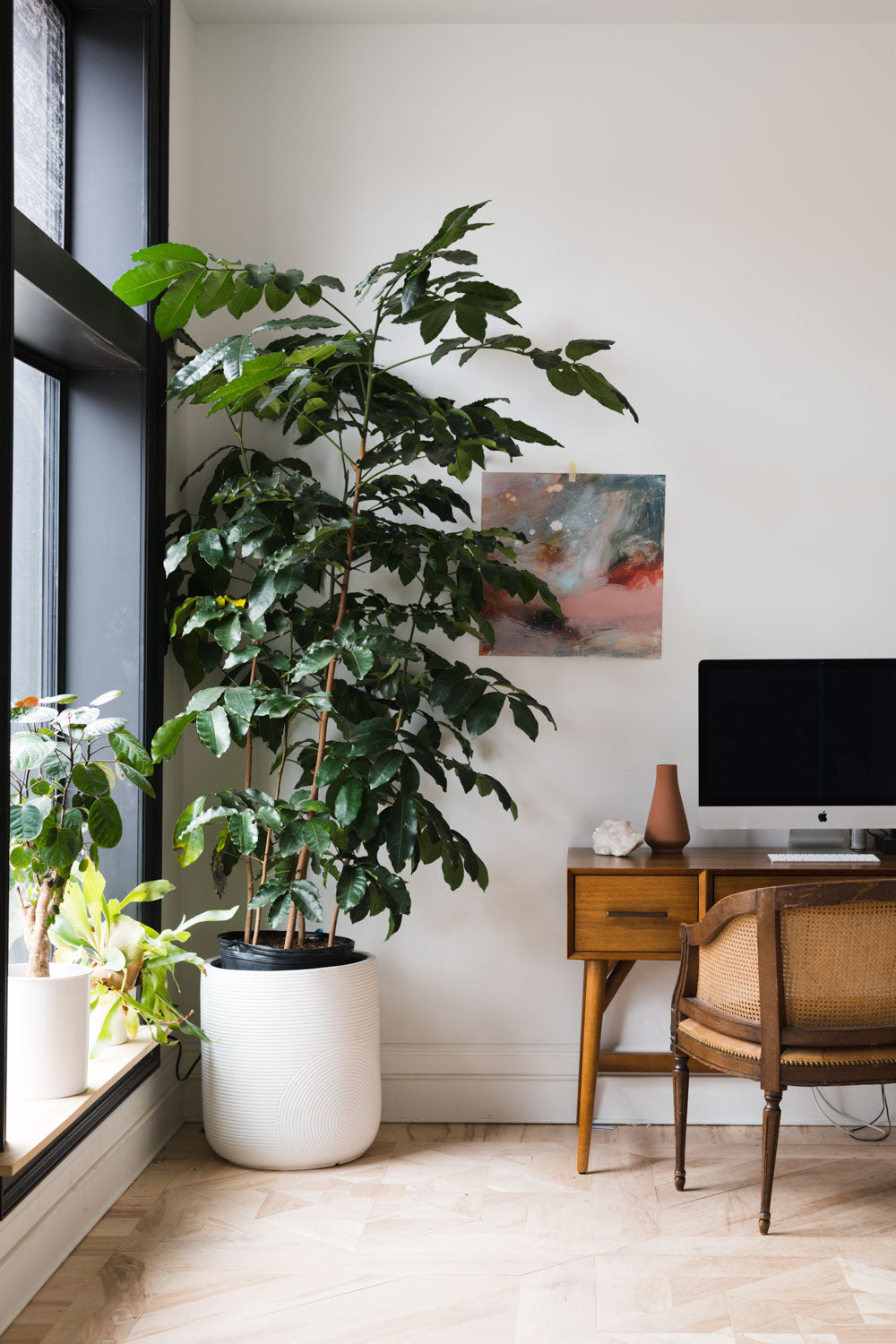 Master List of Low Light Houseplants