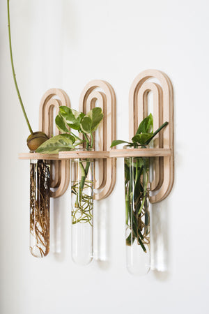 Double Arch Propagation Planter