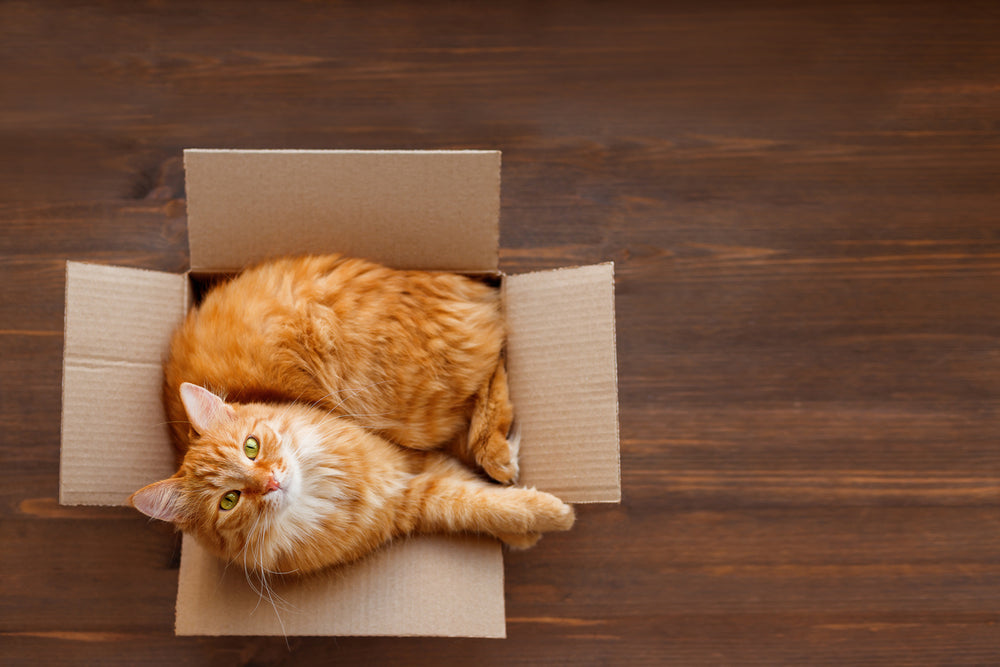 How to Keep Your Cat Calm During a Move