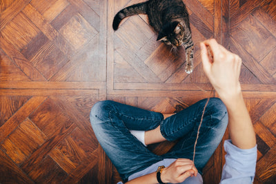 6 Ways to Keep Your Indoor Cat Happy and Healthy