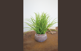 Faux Grass in Cement Pot