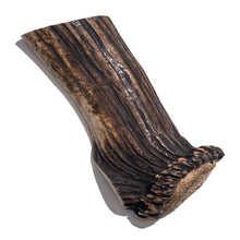 Load image into Gallery viewer, Split Elk Antler - Giant 6 Inch