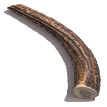 Load image into Gallery viewer, Elk Antler - Giant 8 Inch