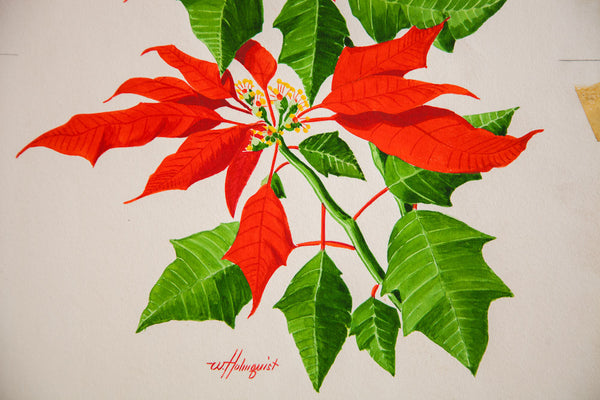 Brilliant Poinsettia Watercolor - Old New House