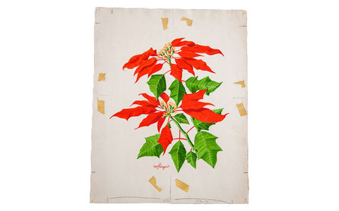 Brilliant Poinsettia Watercolor