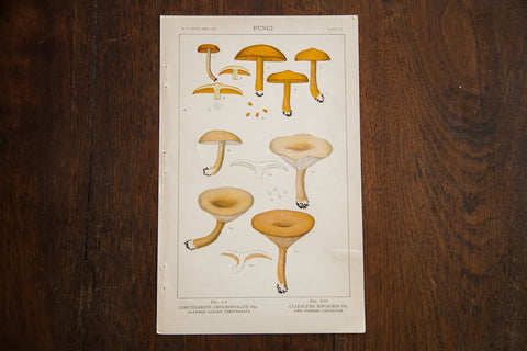 Vintage Mushrooms Fungi Plate Vi