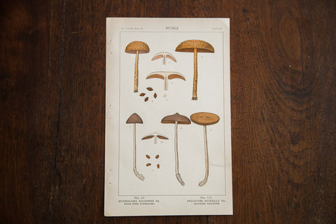 Vintage Mushrooms Fungi Plate Iii