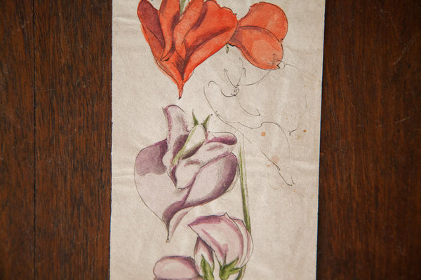 Antique Orchid Watercolor, Casual Sketch Series - Old New House