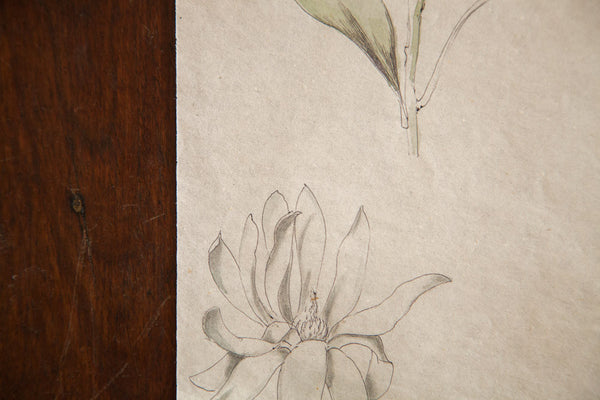 Antique Dainty Flower Watercolor Casual Sketch Series