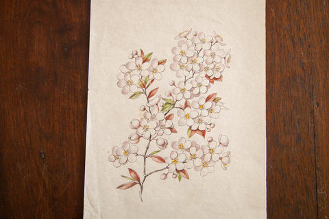 Antique Saturated Prunus Watercolor Casual Sketch Series