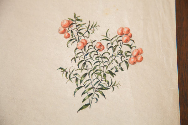 Antique Deathberries Yew Berries In Watercolor Casual Sketch Series
