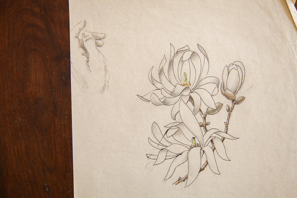 Antique Magnolia Stellata Watercolor, Casual Sketch Series - Old New House