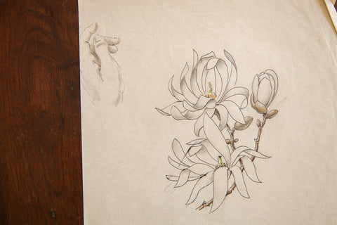Antique Magnolia Stellata Watercolor Casual Sketch Series