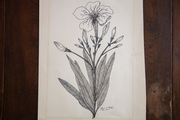 Blossoming Plant In Ink