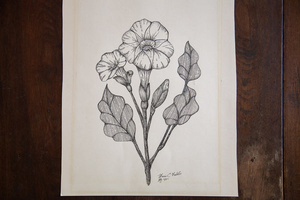 Blossomed Plant in Ink - Old New House