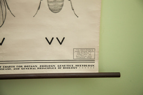 Vintage 1941 Minimilistic Fly Science Chart