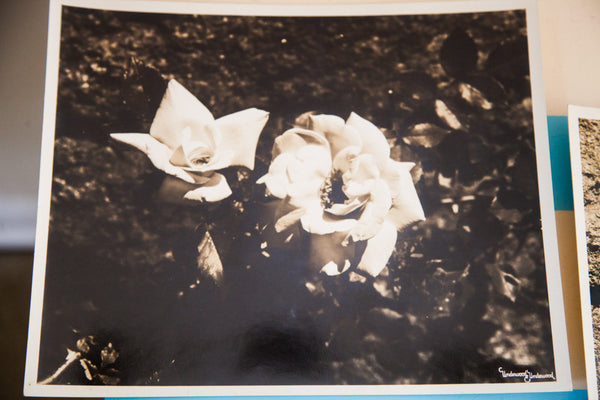 Vintage Underwood And Underwood Flower Photographs - Old New House